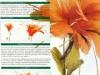 cvety-iz-perev-27