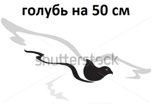 6. голубь на 50 см